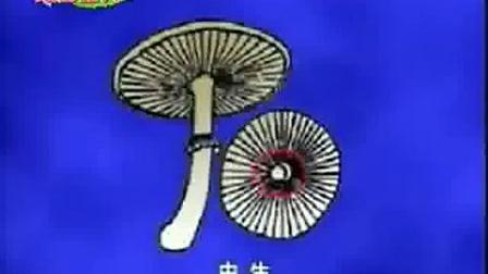 蘑菇种子是怎样做出来的? 食用菌制种技术_高清视频食用菌shiyongjun