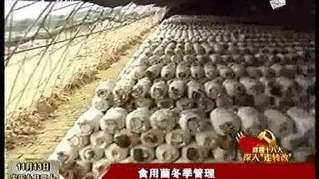 食用菌香菇平菇冬季应如何管理才能产量高之食用菌的冬季管理高产栽培技术_高清视频食用菌shiyongjun