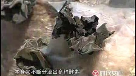 袋装黑木耳的种植方法之立体高产栽培技�c木屑生出的黑珍珠_高清视频食用菌shiyongjun