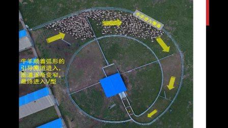 草地畜牧业牛羊智能称重系统使用介绍视频