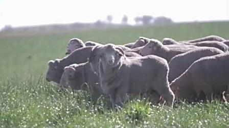 福达平带你游览澳洲牧场 贴近大自然优美风光