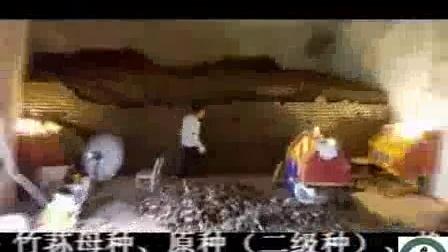 清香型织金红吒竹荪及菌种生产高产栽培技术_高清视频食用菌shiyongjun