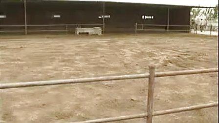 养牛技术大全03集(夏季奶牛高产饲养管理技术)视频