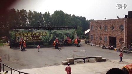 大连森林动物园泰国风情大象表演