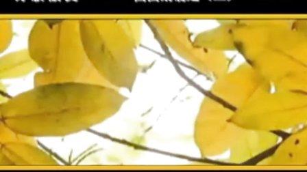 一片槐树叶 1