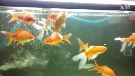 金鱼的画法步骤图解