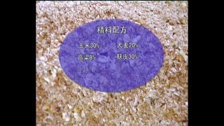 黄牛养殖,加2820054988,(西门塔尔牛的养殖技术)视频