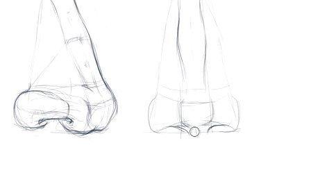 素描鼻子结构步骤