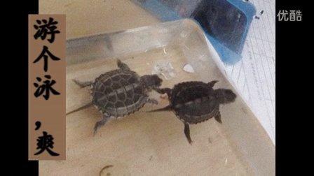 百变魔尺24段图解步骤变乌龟