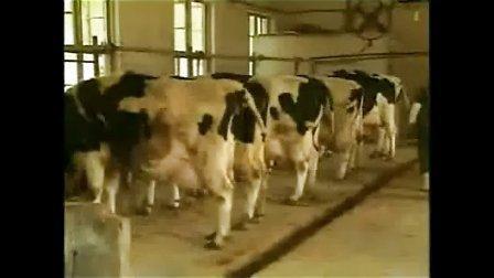 奶牛养殖技术(更多加193168353)视频