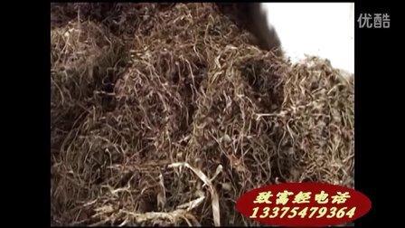肉羊如何配种-养羊场-养羊技术视频
