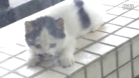 diy简笔画动物猫