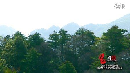 河南小秦岭国家级自然保护区宣传片