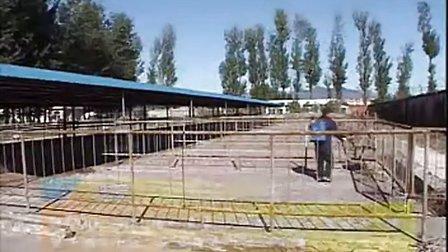 四川肉牛养殖场牛犊养殖场西门塔尔养殖场视频