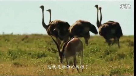 yy频道动物设计图