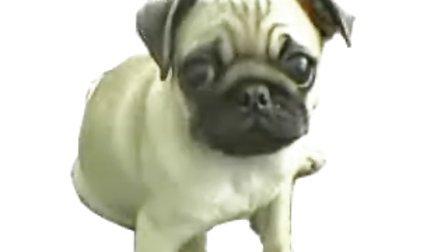 搞笑狗狗的rap