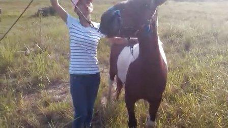 美女骑马6
