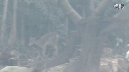 2013长隆香江野生动物园
