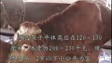 东北牛网-吉林省伊通县壮志牧业养殖场2视频