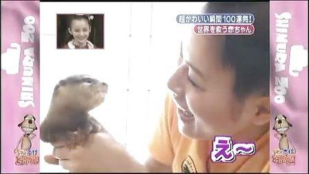 天才!志村动物园 20081129 sp 1 相叶雅纪 岚