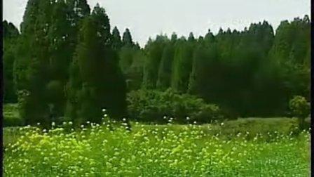 (清国晓娜)钢琴曲 绿岛小夜曲