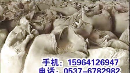 肉牛养殖技术肉牛养殖前景肉牛的饲养肉牛养殖视频