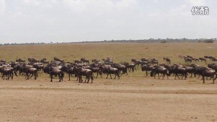 肯尼亚马赛马拉草原大迁徙
