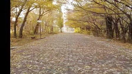 壁纸 风景 森林 桌面 448_252