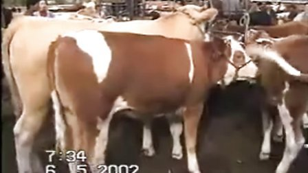 东北牛网-吉林省伊通县壮志牧业养殖场视频
