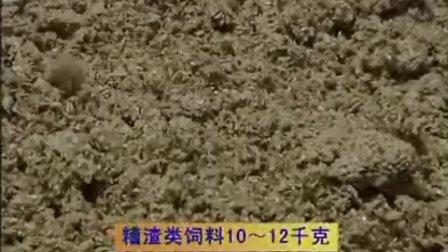 奶牛养殖秸秆微贮技术02视频