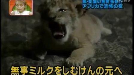 天才 志村动物园 相叶雅纪04年05年06年