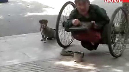 【拍客】半身乞讨老人与狗的故事