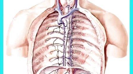 犬类解剖咽喉结构图-猪脾脏结构图