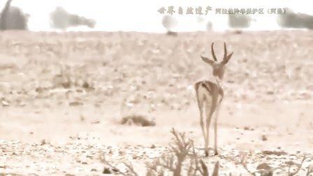 2012人与自然之动物世界
