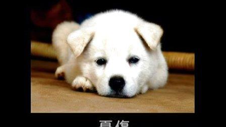伤感动物图片带字