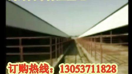 肉牛养殖场-肉牛-肉牛养殖-肉牛价格-牛场建设-肉牛行情视频