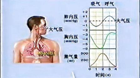 人体生理解剖学教材_人体解剖生理学11