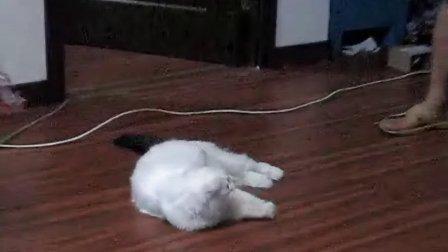 猫圈怎么用图解
