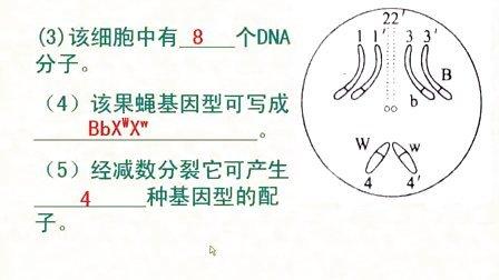 汉水丑生  高中生物 必修二 伴性遗传全集(新课习题课解题技巧)