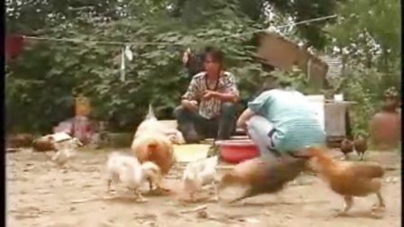 10-06-07 农业信息——迷上小龙虾的女大学生