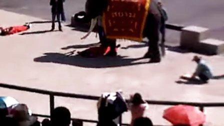 大连森林动物园泰国大象表演