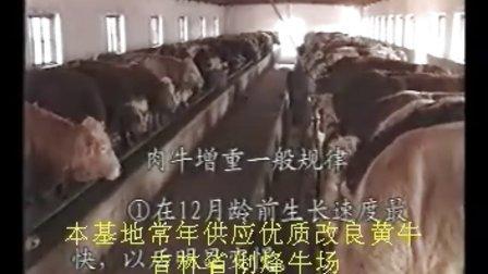 育肥牛养殖技术黄牛养殖技术视频
