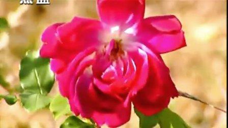 谭晶-绒花