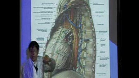 复旦大学局部解剖学
