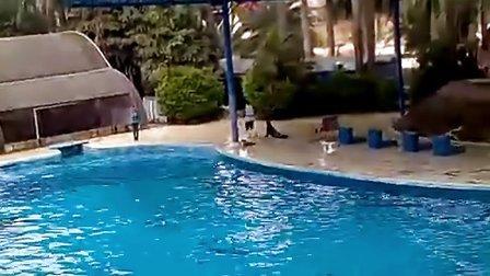 南宁动物园海豚表演