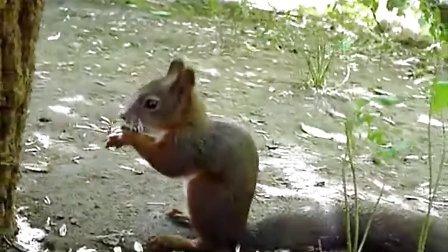 小松鼠吃瓜子