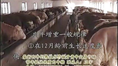 架子牛饲养技术、架子牛交易市场、架子牛价格咨询、架子牛养殖技术咨询视频