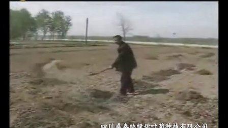 盛泰純綠甜葉菊栽培技術