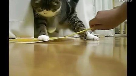 可爱的花样猫....