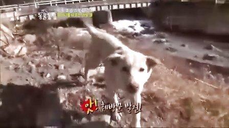 韩国综艺节目:动物农场